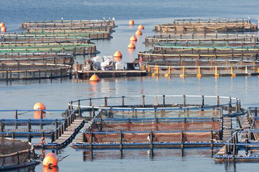Acquacoltura: innovazioni e problemi illustrati al congresso mondiale tenutosi in Francia. Più della metà del pesce consumato è d'allevamento