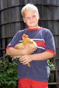 bambino gallina