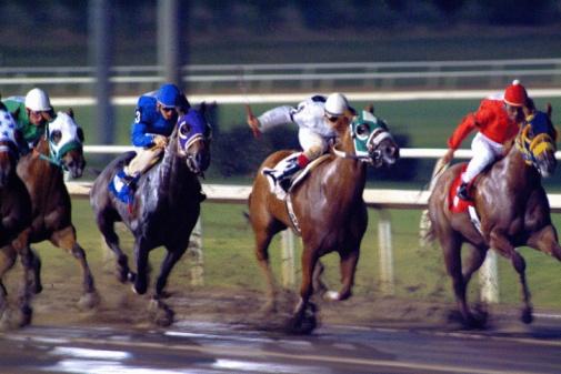 cavalli corse