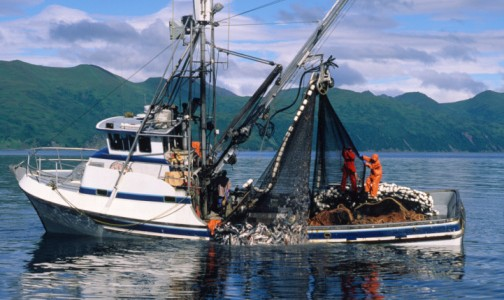 pesca barca