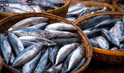 Pesce, aumentano consumi e import. Ma gli italiani dimenticano le specie tipiche del Mediterraneo. Intervista a Valentina Tepedino di Eurofishmarket