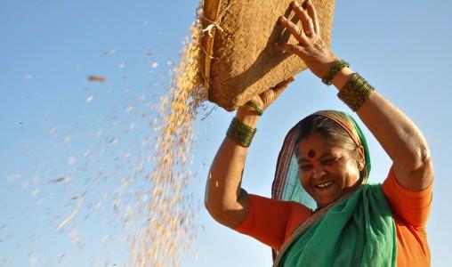 riso india
