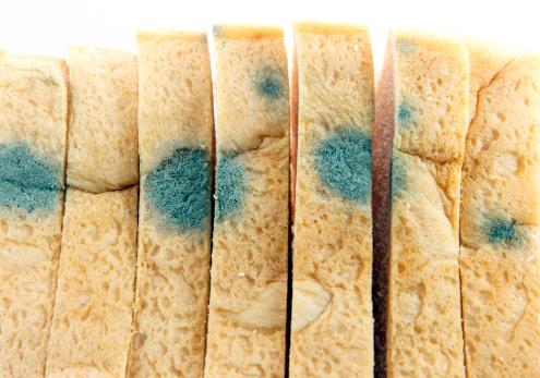 Muffa negli alimenti conservati in frigorifero, cosa fare? Risponde Antonello Paparella dell'Università di Teramo