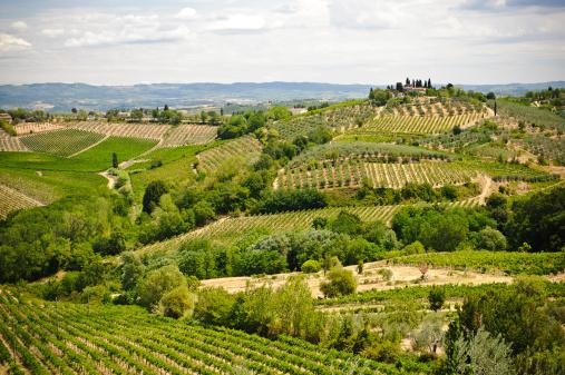 paesaggio vigneti Toscana