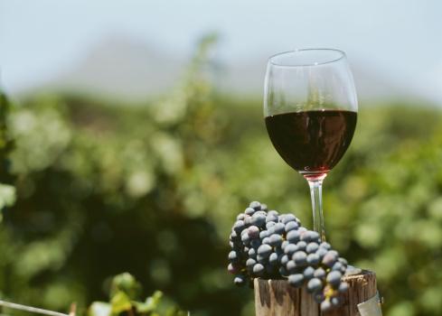 vino uva vigneto
