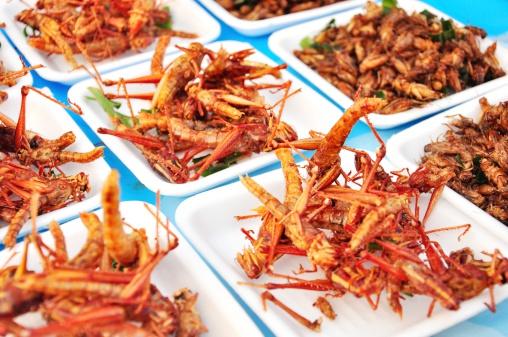 insetti piatto