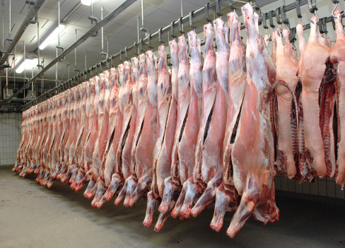 carne macello bovina bue