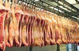 maiale carne carcasse