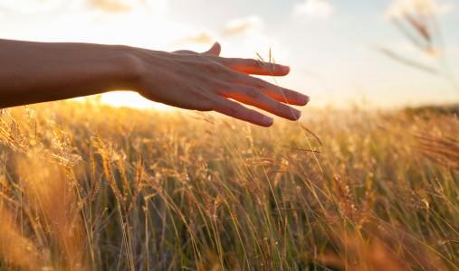 grano mano agricoltura 166640643