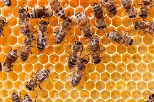 Giornata Mondiale delle Api: l'importanza delle api per la biodiversità e l'equilibrio degli ecosistemi