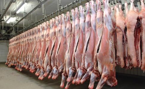 carne macello