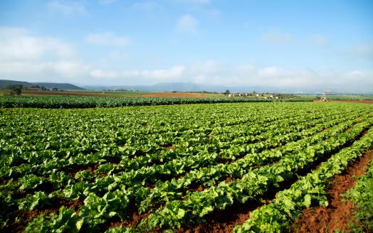 Coltivare in terreni salini è possibile. Un progetto europeo studia nuove strategie per combattere gli effetti del cambiamento climatico