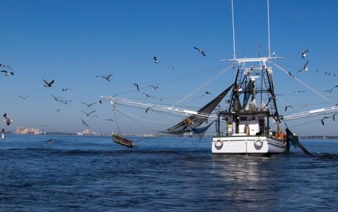Buone notizie, non tutto il pesce nel mondo è in declino. Ma le aree del Sud Est asiatico sono ancora a rischio