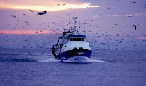 Anche quest'anno il Giappone riprende la caccia alle balene