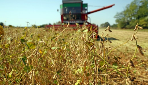 Soya harvesting