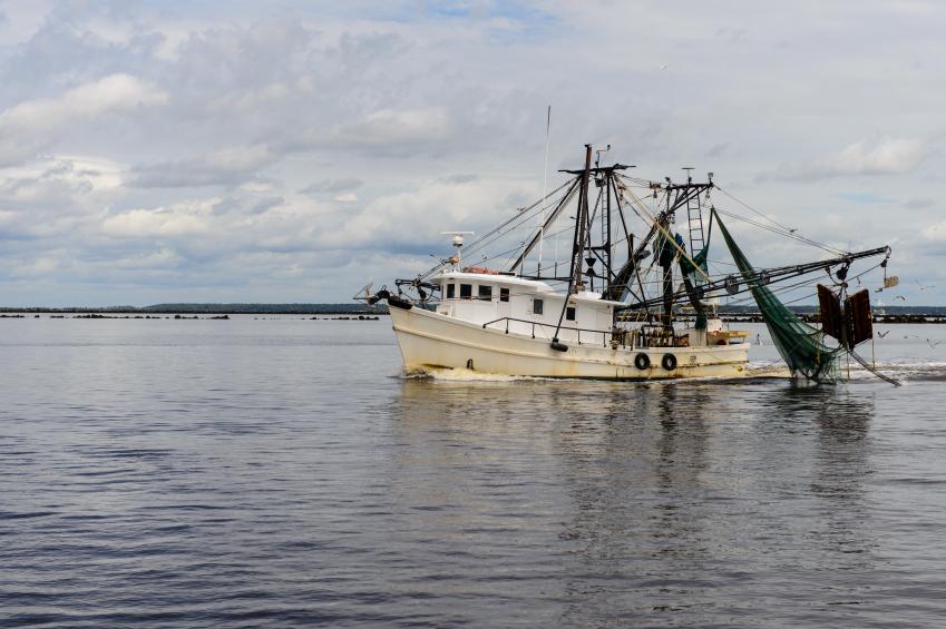 Pesce indesiderato, il divieto europeo di scarico in mare non funziona: aumentata la pesca in eccesso