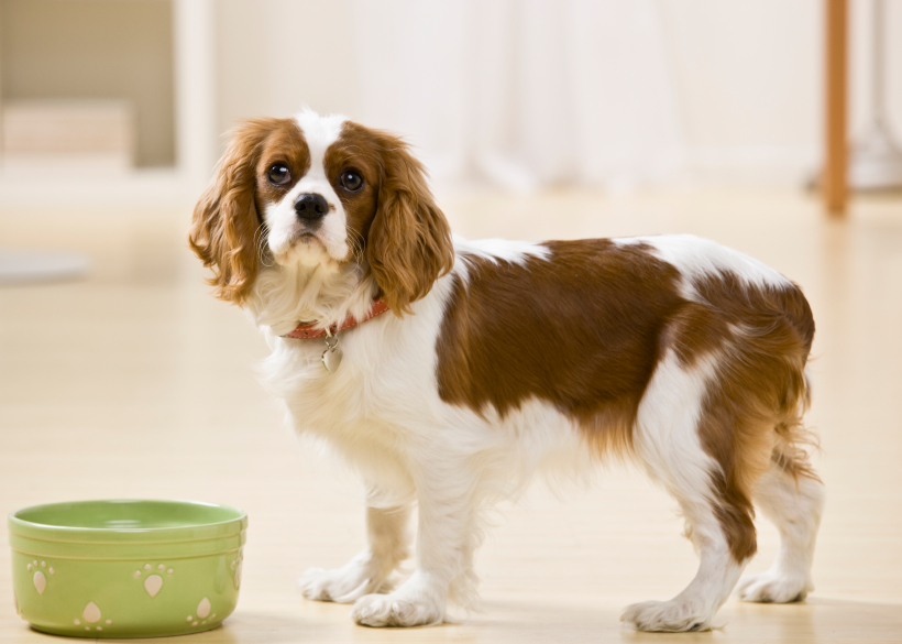 Cães, como escolher as melhores guloseimas?  O teste Altroconsumo 4
