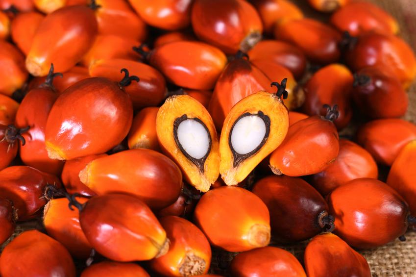 olio di palma Oil palm fruit