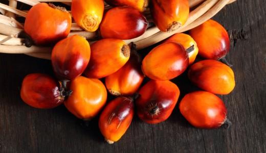 Fare a meno dell'olio di palma è una missione impossibile? Le strategie esplorate da aziende e ricercatori