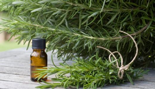 rosmarino odori erbe aromatiche piante olio essenziale iStock_000016442321_Small
