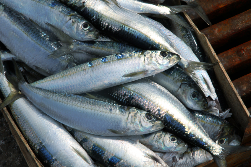 sardines on a fish market