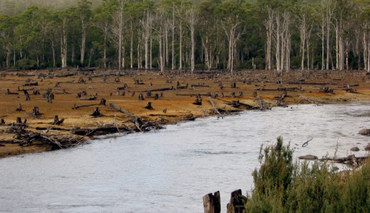 La deforestazione nel piatto: carne, soia e caffè tra le maggiori cause di distruzione delle foreste. Il report WWF