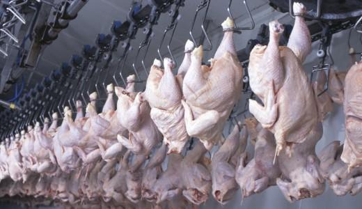 carne pollo industria trasformazione lavorazione