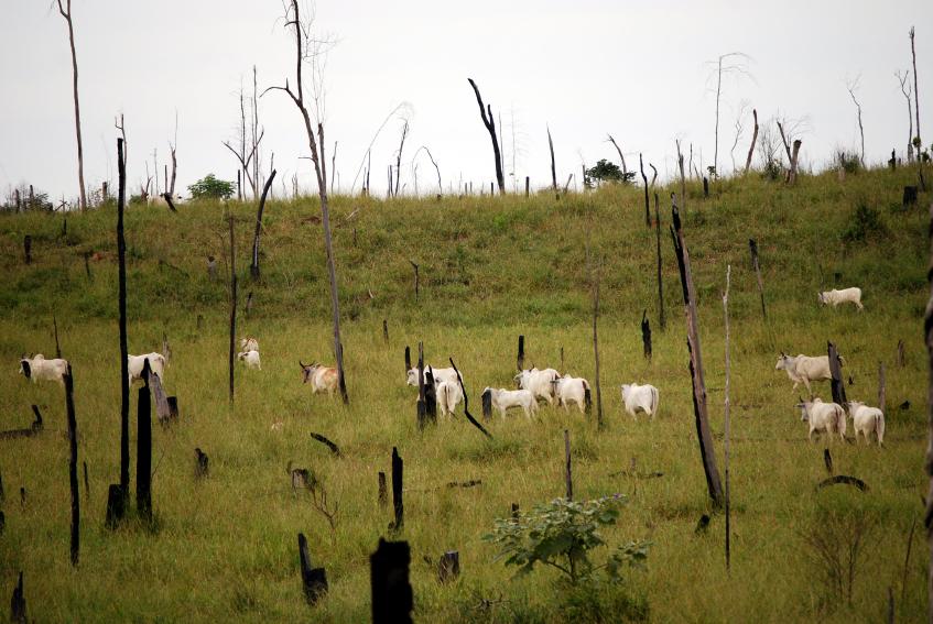 brasile deforestazione disboscamento iStock_000007201386_Small biodiversità