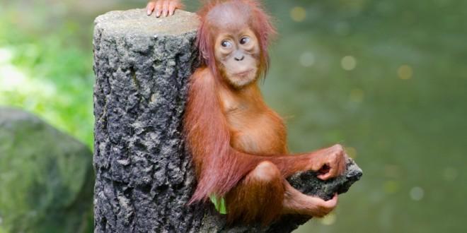 Noemi e Greenpeace: video in difesa degli oranghi. Stop alla deforestazione causata dalle coltivazioni di olio di palma