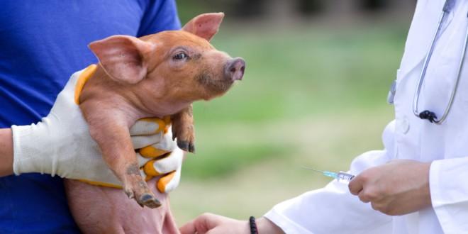 Nuove regole Ue sui farmaci veterinari per combattere la resistenza agli antibiotici. Standard validi anche per gli alimenti importati