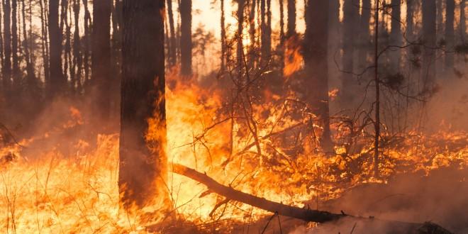 foresta incendi