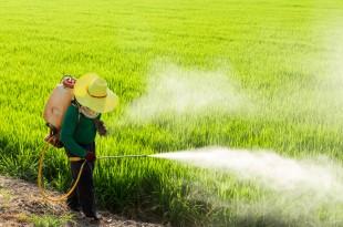 pesticidi erbicidi campi agricoltura riso