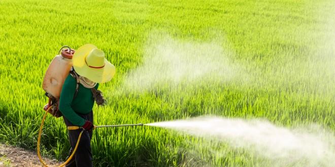 La Francia ritira 36 prodotti contenenti glifosato e due insetticidi potenzialmente dannosi per le api. La decisione dell'Anses