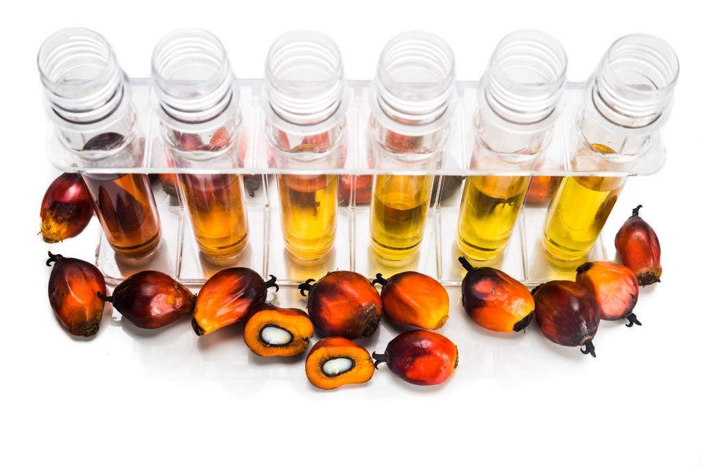 Oil palm biofuel biodiesel with test tubes on white background