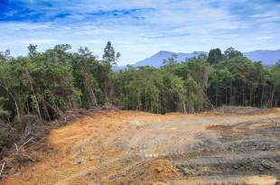 deforestazione alberi