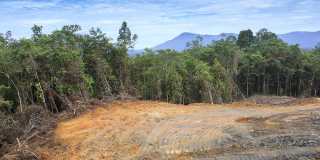 Greenpeace: conto alla rovescia verso l'estinzione. Le industrie agricole si stanno mangiando le foreste
