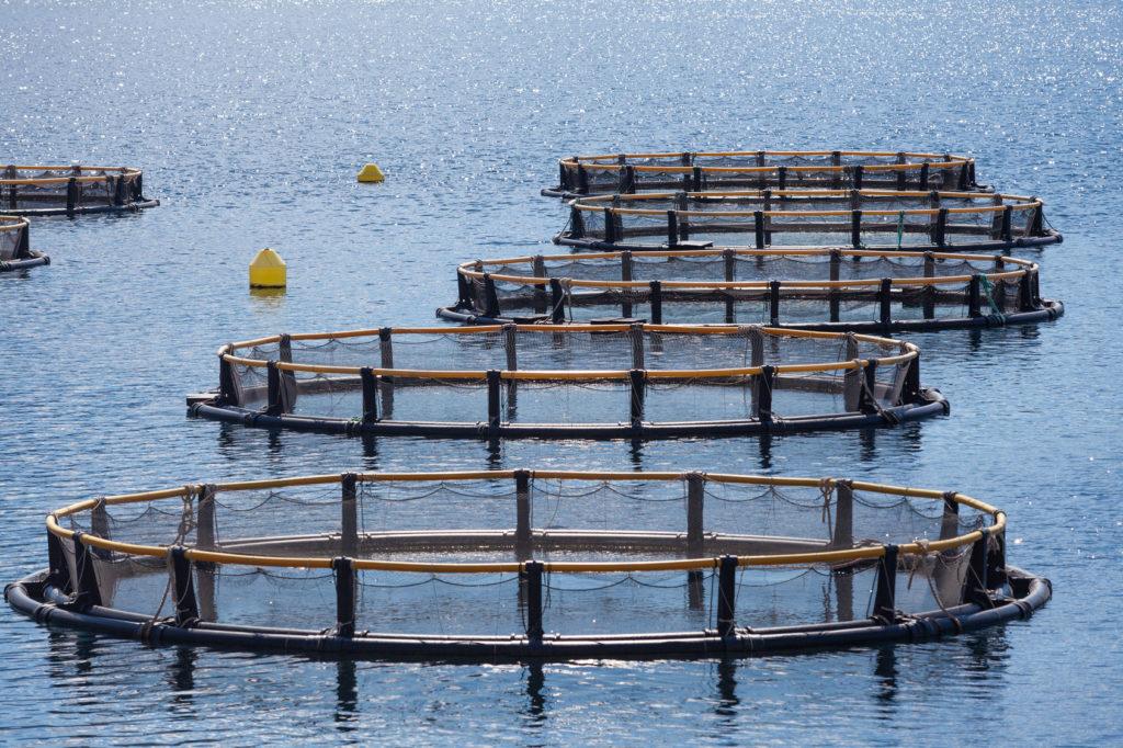 acquacoltura mediterraneo
