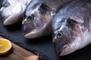 pesce stock