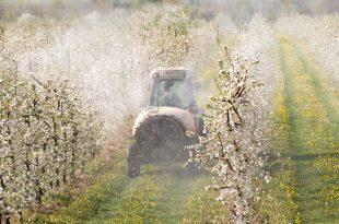 insetticida erbicida pesticidi erbicidi campi agricoltura