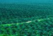 Le palme da olio non sono più sole: un progetto per coltivarle insieme ad altre piante locali e aumentare la biodiversità