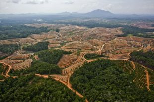 Palm Oil Plantation in Central Kalimantan