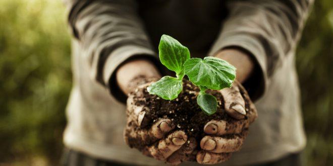 L'agroecologia per il futuro della biodiversità. Il manifesto di oltre 360 ricercatori per un'agricoltura più sostenibile