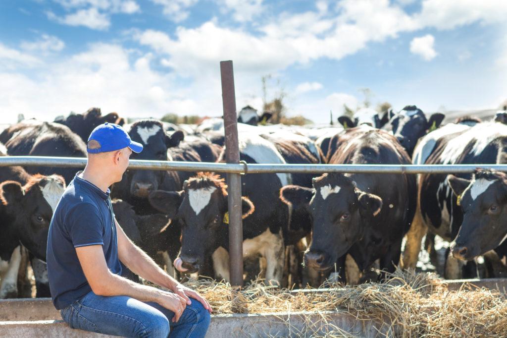 animali manzo vacca allevamento