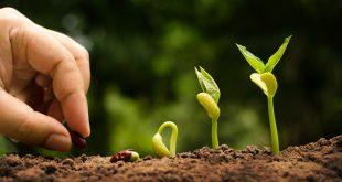 coltivare agricoltura semi piante