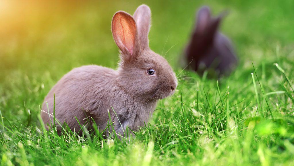 benessere animale per i conigli ci sono i recinti non. Black Bedroom Furniture Sets. Home Design Ideas