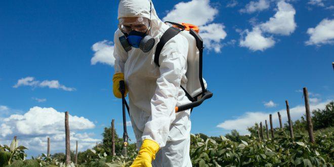 Via dal glifosato: esistono alternative non chimiche al controverso pesticida? La valutazione dell'Anses