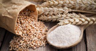 farina integrale grano spighe
