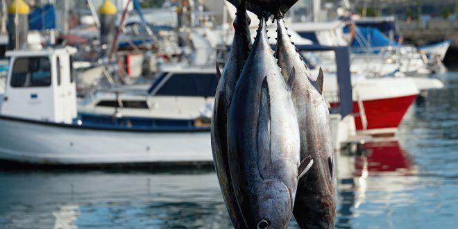 Il tonno circolare. Con il progetto We Sea, Mare Aperto valorizza il 100% della materia prima