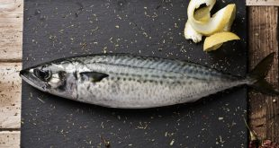 sgombro pesce limone