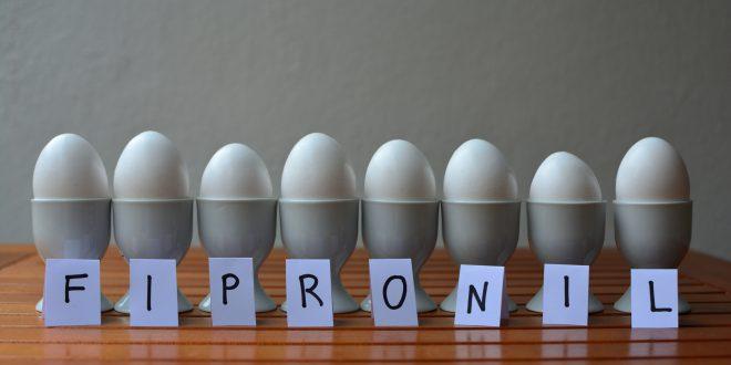 Scandalo fipronil, due persone condannate nei Paesi Bassi per lo scandalo delle uova contaminate